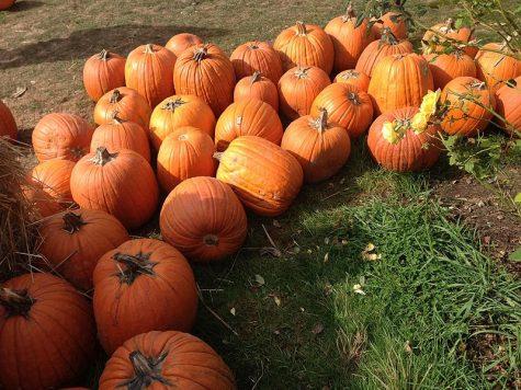 Pumpkin Patch a Smashing Success