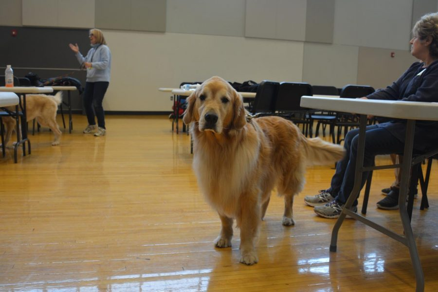 Students+enjoyed+a+visit+from+therapy+dogs+during+December+exams.