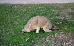 Coyote Decoys Reduce Goose Nuisance