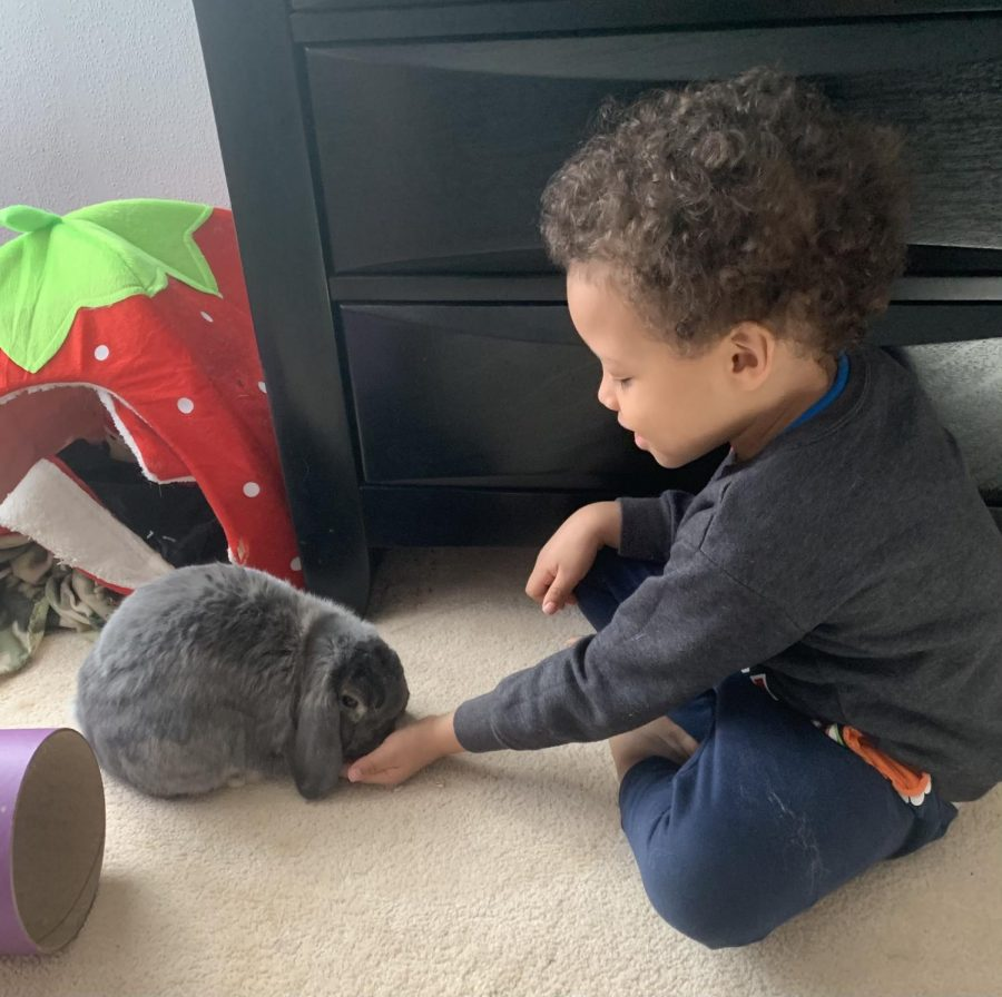 Sarah Carrington's nephew Ivan meets her rabbit Max.